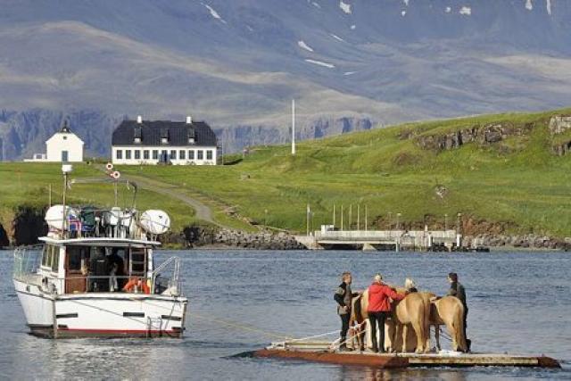 Hestar voru fluttir út í Viðey og börnum boðið að ...