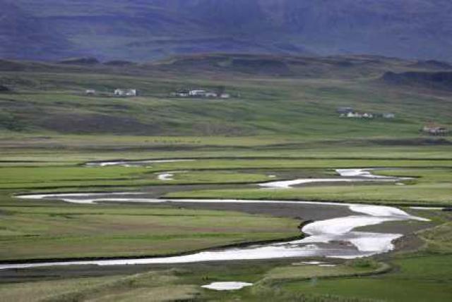 Laxinn er mættur í Víðidalinn.