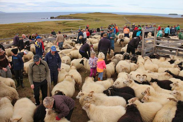 Réttir á Bakka við Húsavík