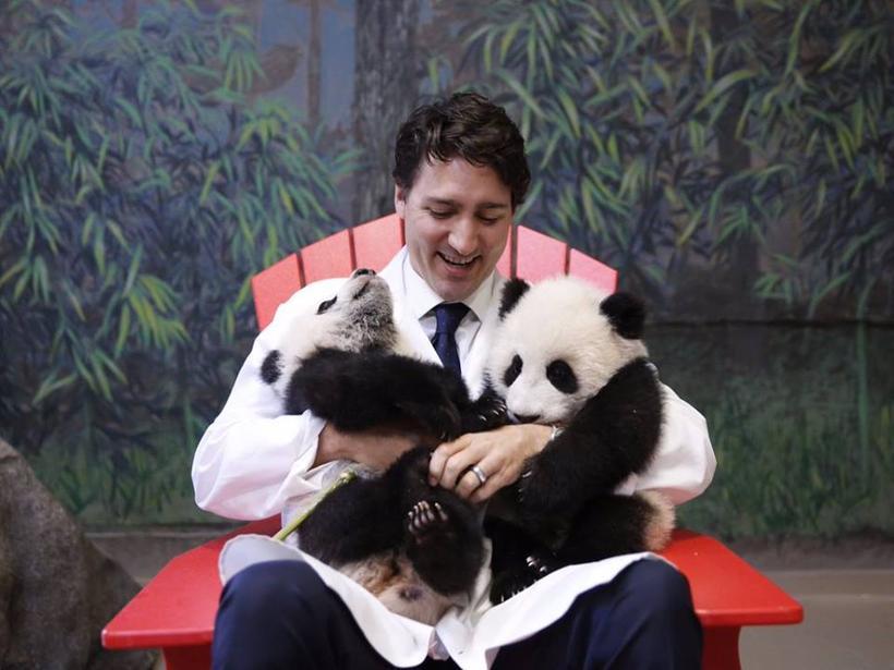 Justin Trudeau, forsætisráðherra Kanada, ásamt Gleði og Von, fyrstu pandahúnunum ...