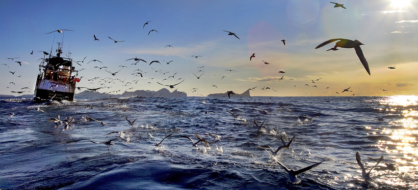 Catching fish off the Vestmannaeyjar coast.