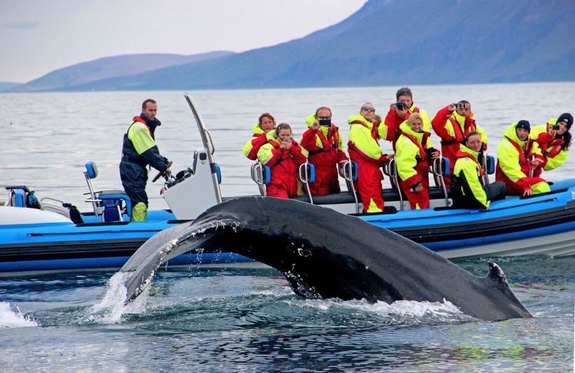 Big Island Whale Watching Locations