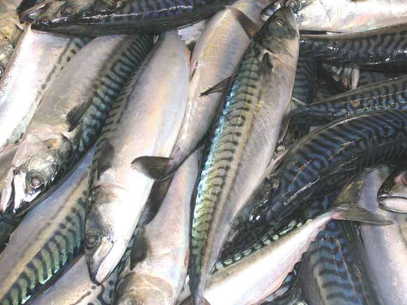 Russia is a major market for Icelandic fisheries products.