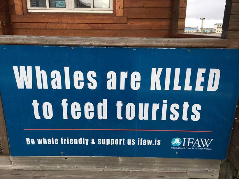 A clear message outside the offices of IFAW in Reykjavik.