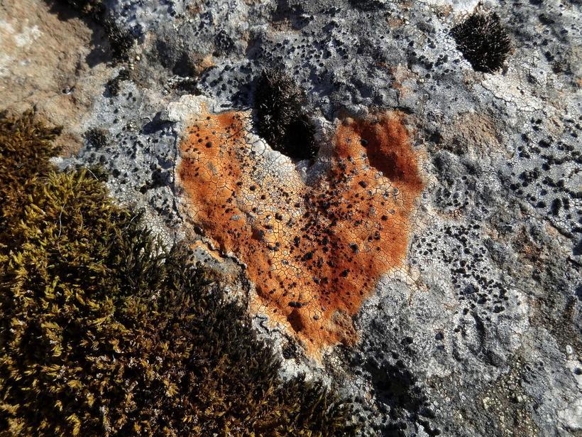 A heart found in Héðinsfjörður, on a mossy rock.