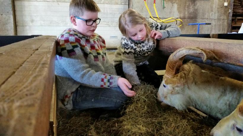 The kids on the farm feeding Einhyrningur.