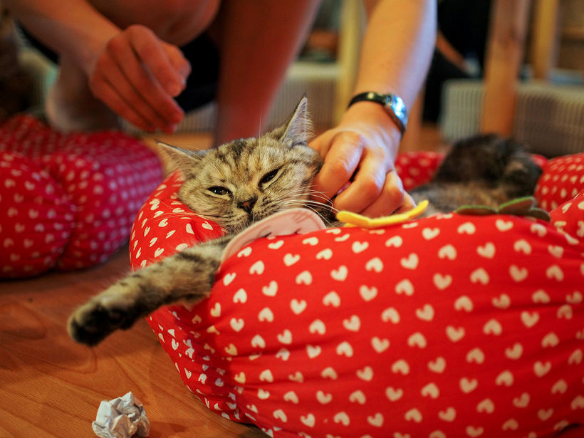 Cat cafés are extremely popular all over the world.