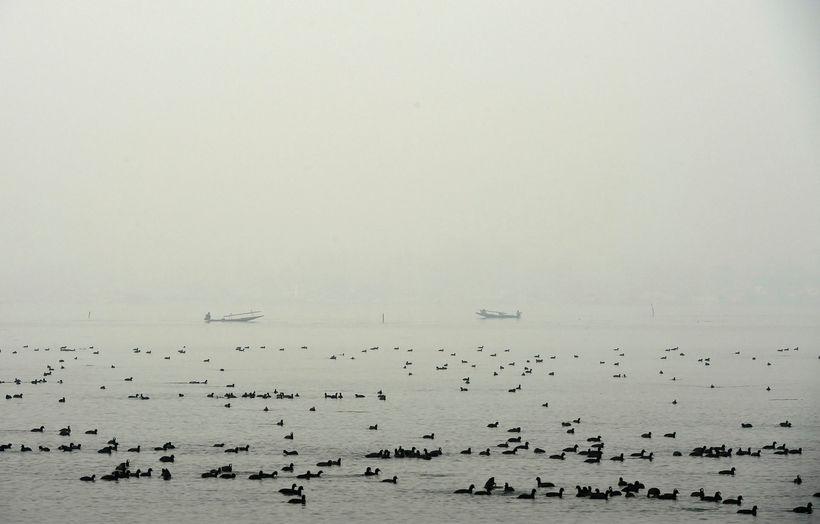 Þoka yfir Dal-vatni í Srinagar á Indlandi.