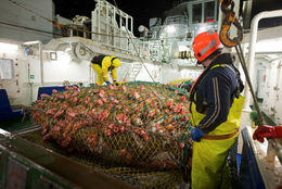 Veitt magn af uppsjávarfiski var rúmum 314 þúsund tonnum meira en af botnfiski.