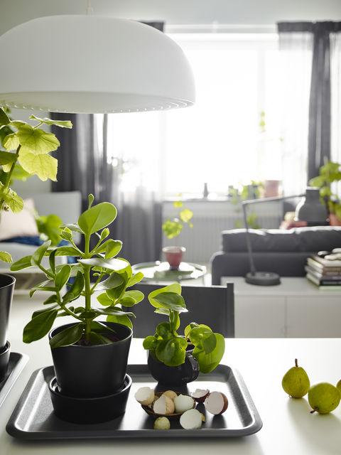 Plöntur hafa sjaldan verið vinsælli. Þessar eru úr IKEA.