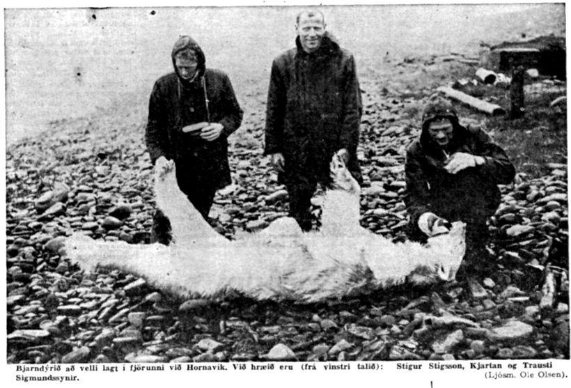 Menn við eggjatöku í Hornvík felldu fullvaxinn hvítabjörn 1963.