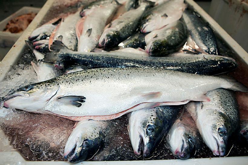 Arctic Sea Farm hf. heldur rekstrarleyfi sínu samkvæmt úrskurði umhverfis- ...