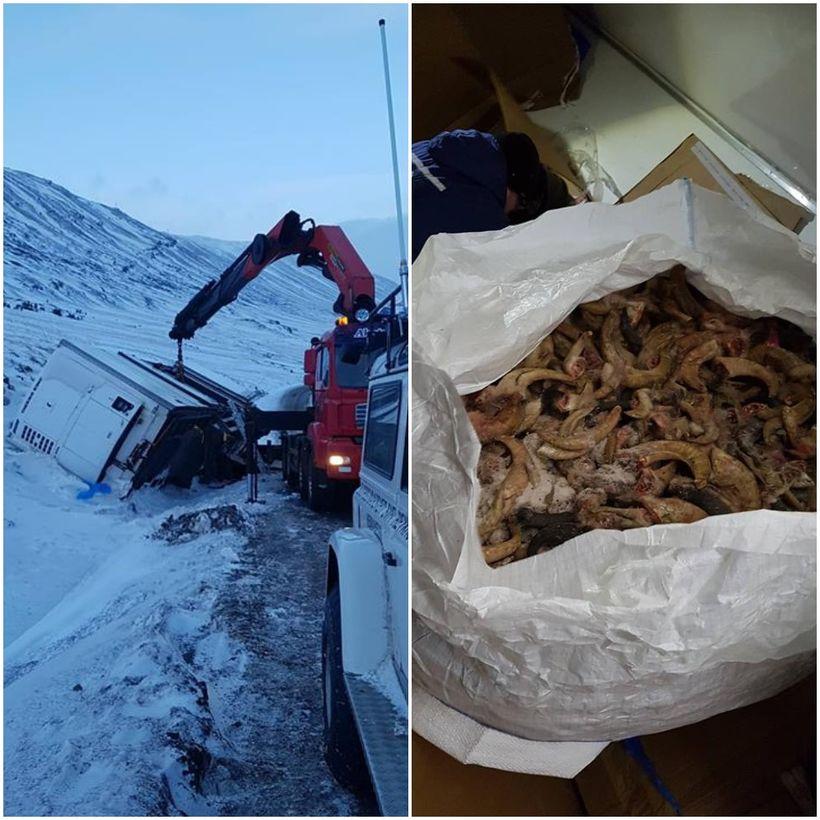 Björgunarsveitarmenn úr sveitinni Heimamönnum handtíndu 22 tonn af lambahornum úr ...