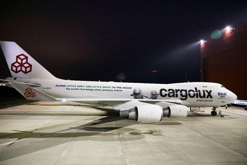 Flugvél Cargolux sem mun flytja hvalina til Íslands.