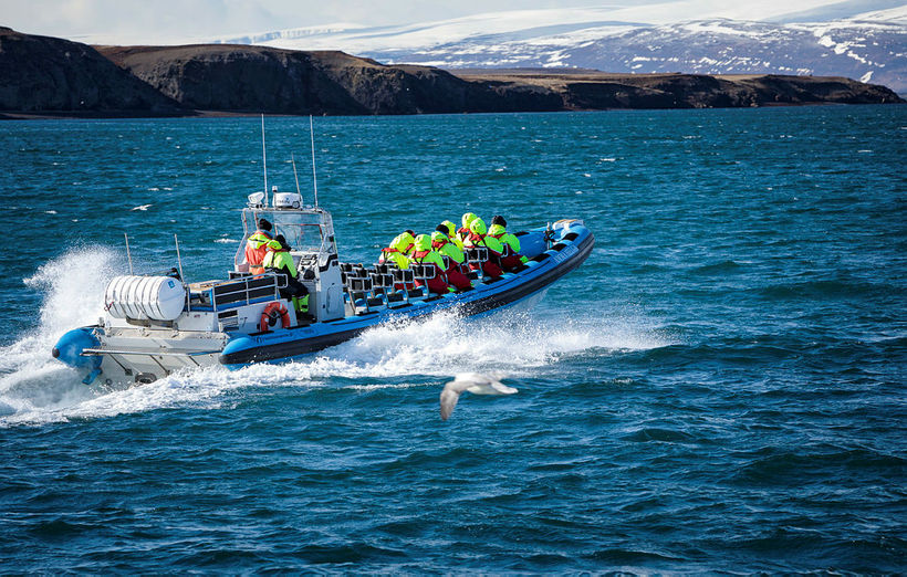 Whale watching is the main attraction in Húsavík.