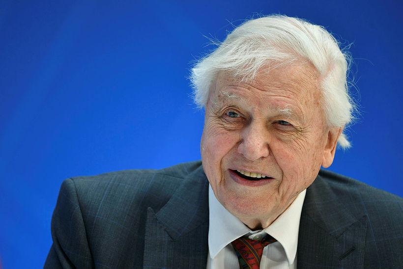 Sir David Attenborough verður 93 ára gamall í maí og ...