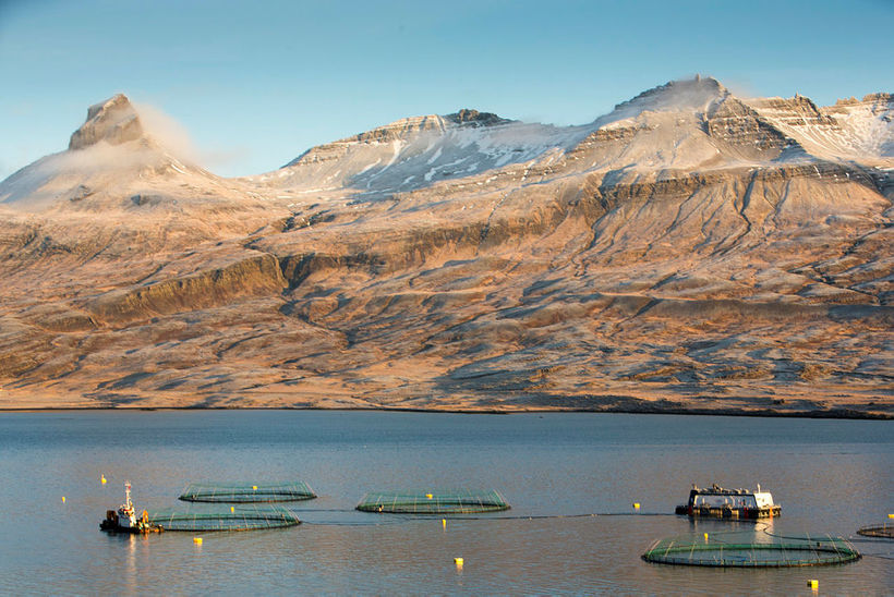 Fjárfest var í fiskeldi fyrir um 4 milljarða króna árið ...
