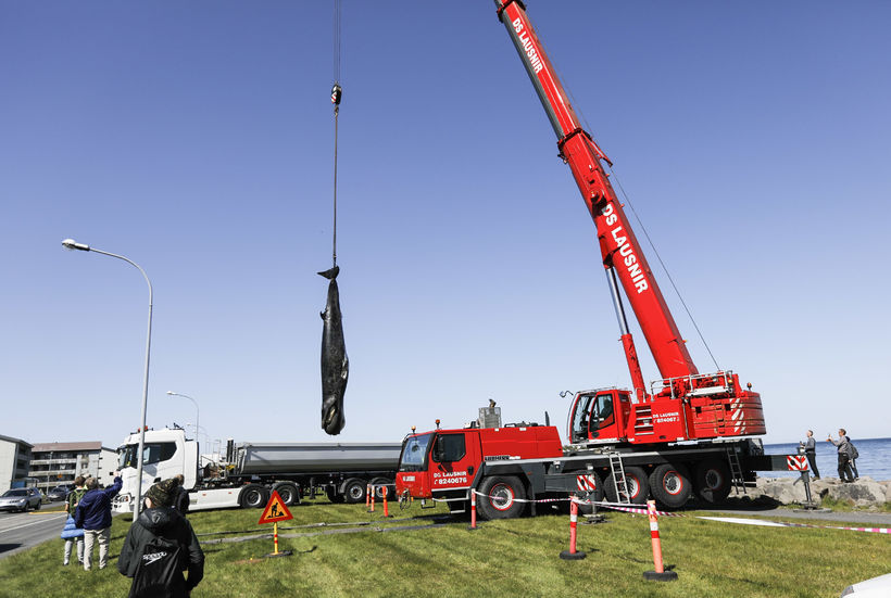 The carcass was lifted up with a crane.