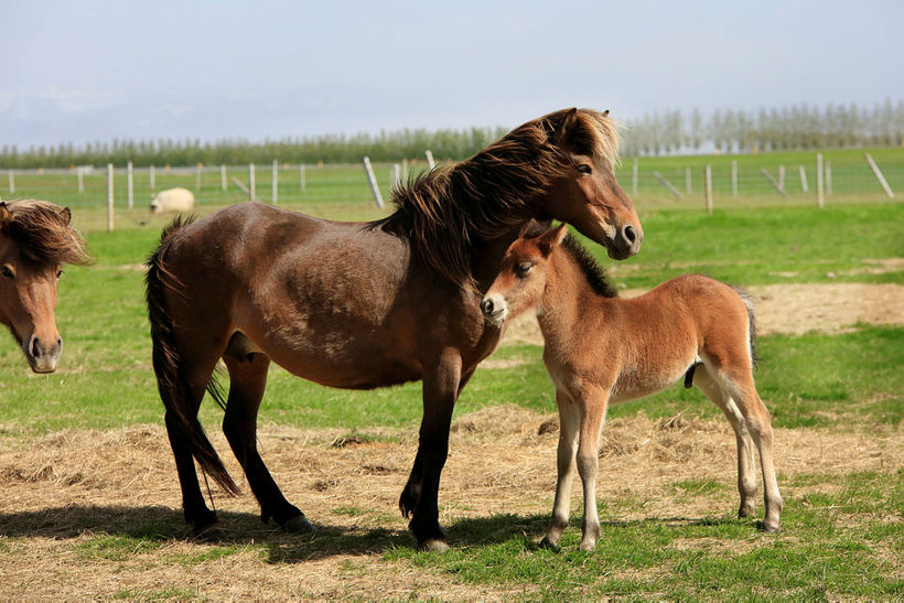 This foal does not venture far from its mother.