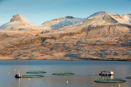 Salmon farming in the East Fjords.