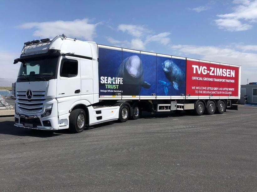 TVG-Zimsen sér um flutninginn á mjöldrunum á Íslandi.