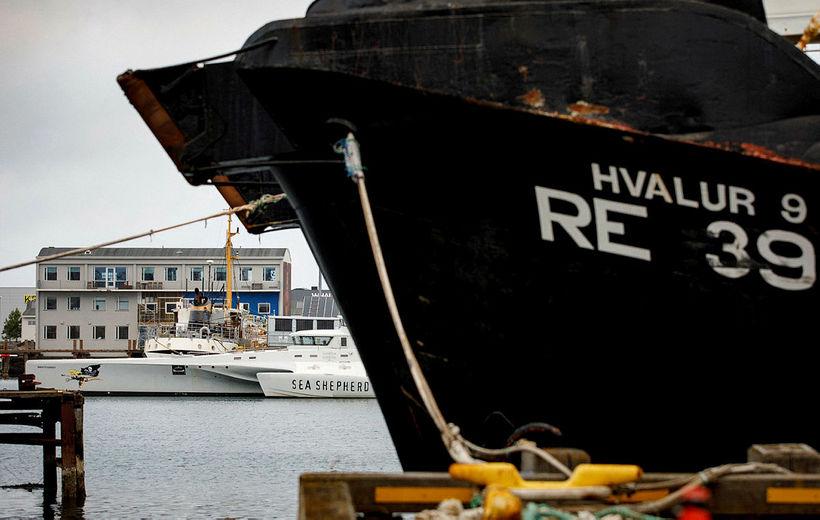 Skip Sea Shepherd, MV Brigitte Bardot, sést hér í fjarska ...