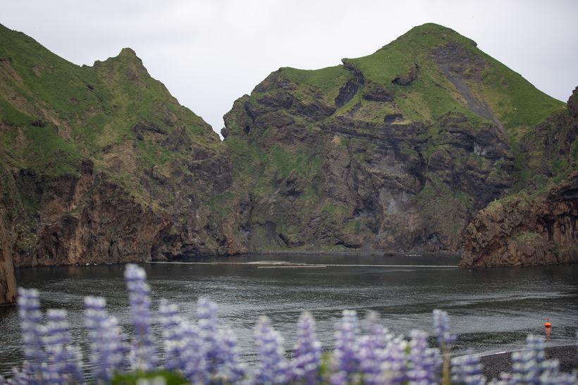 Systurnar munu dvelja í sérstöku griðarsvæði í Klettsvík sem er ...