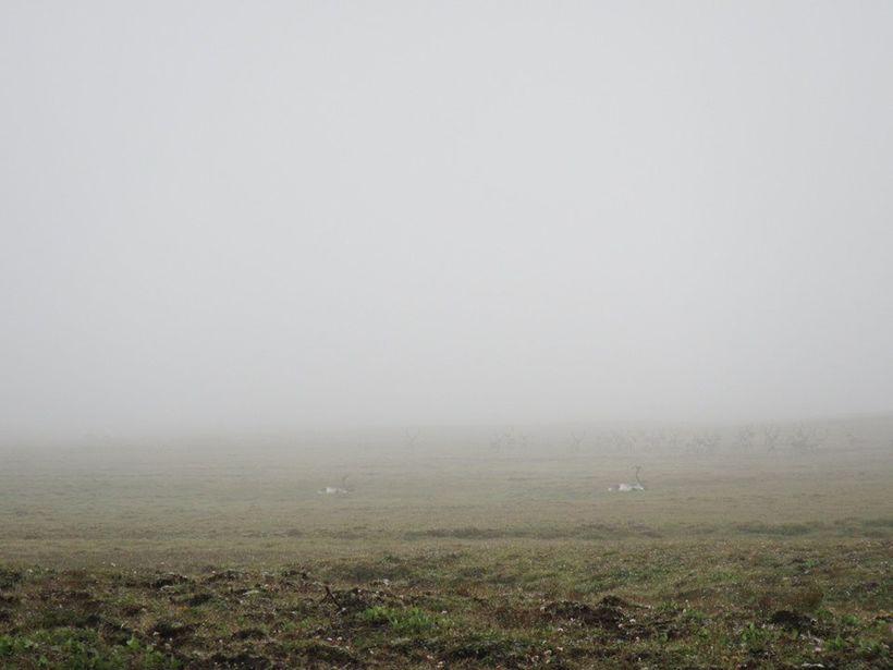 Þessi mynd sýnir aðstæður vel. Tarfarnir tveir fallnir og hjörðin …