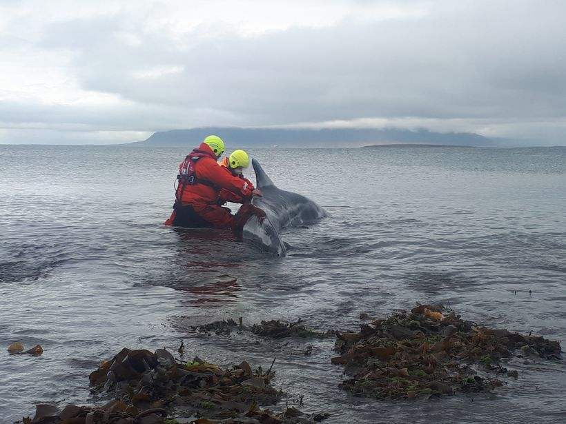 Rescue workers did their best to save the whale.