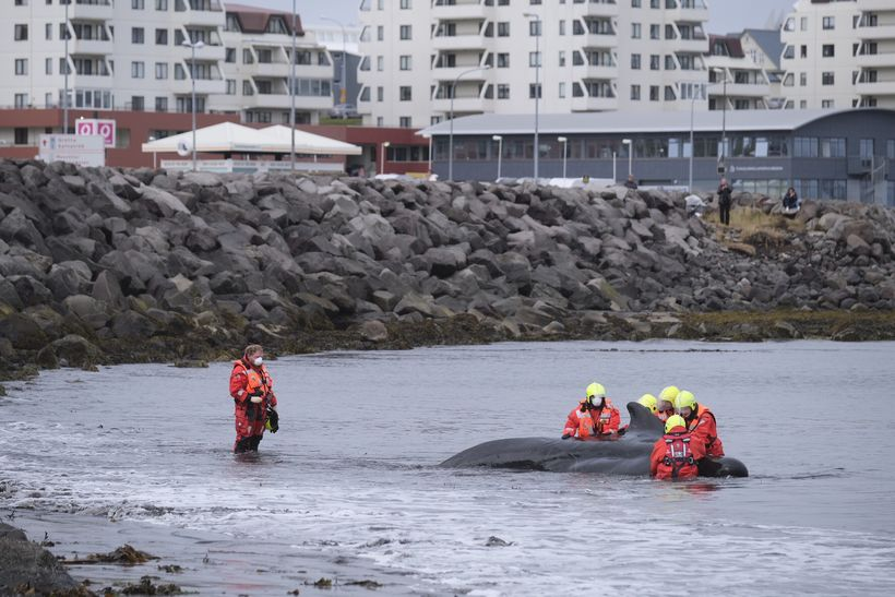 Rescue team at work.