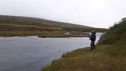 Glímt við lax í Fjárhyl í Selá í Vopnafirði í vikunni.