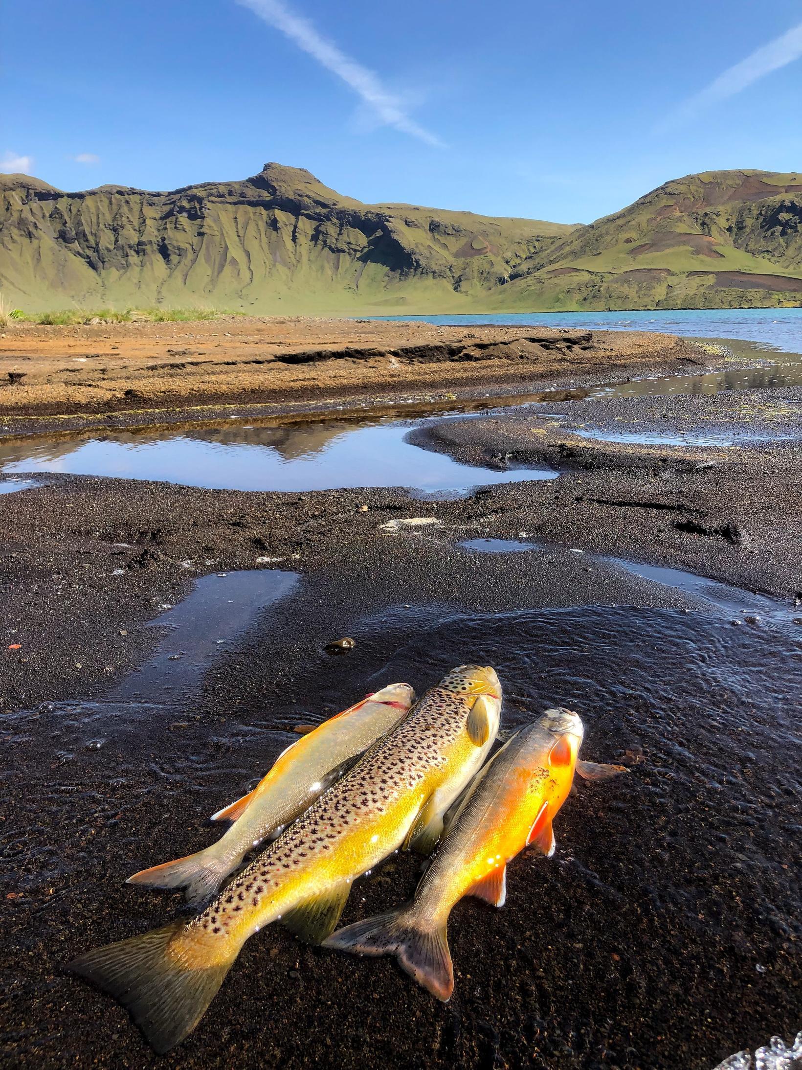 Heiðarvatn við Vík í Mýrdal er eitt gjöfulasta veiðivatn á ...