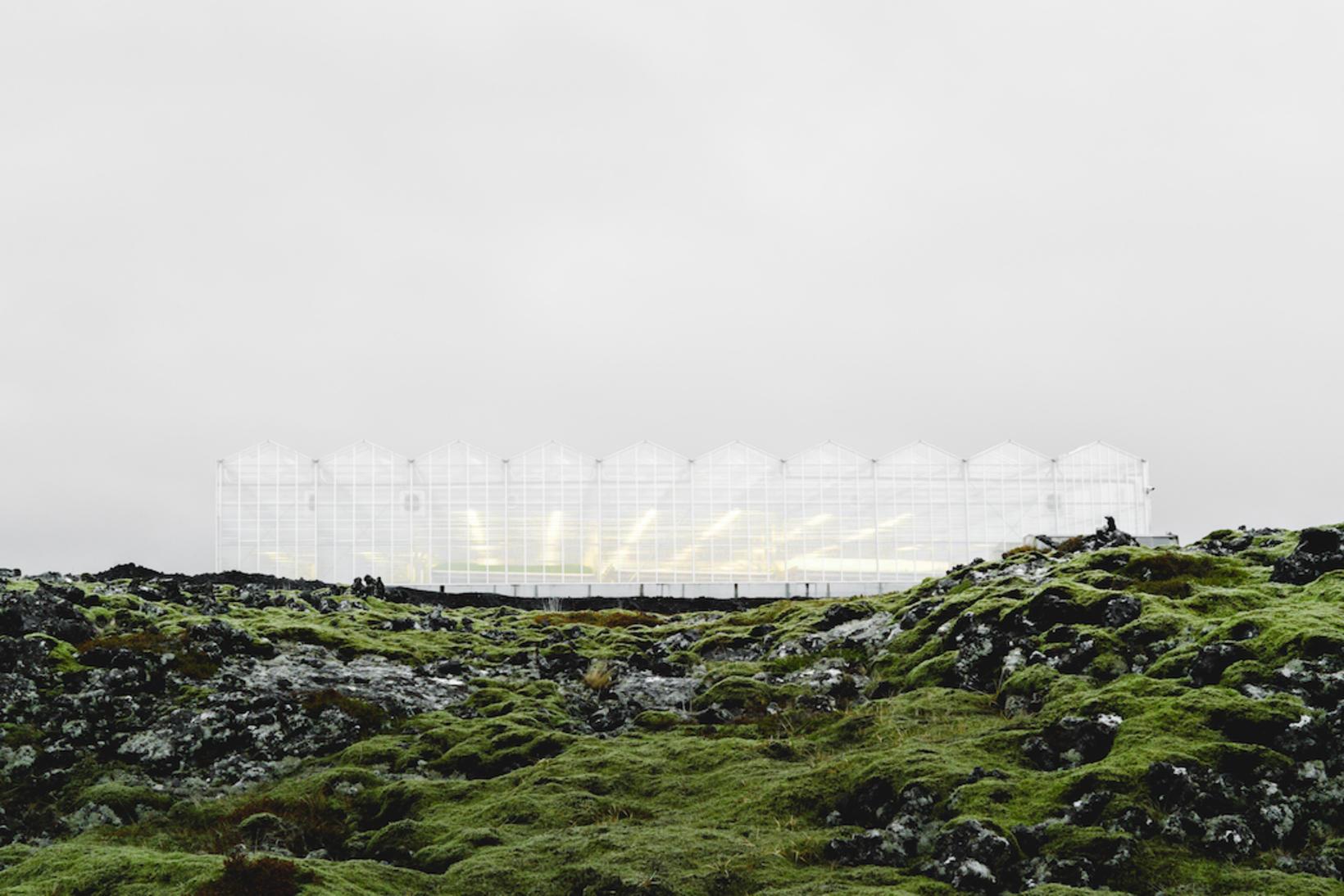 Gestastofa í Grænu smiðju ORF Líftækni í Grindavík.