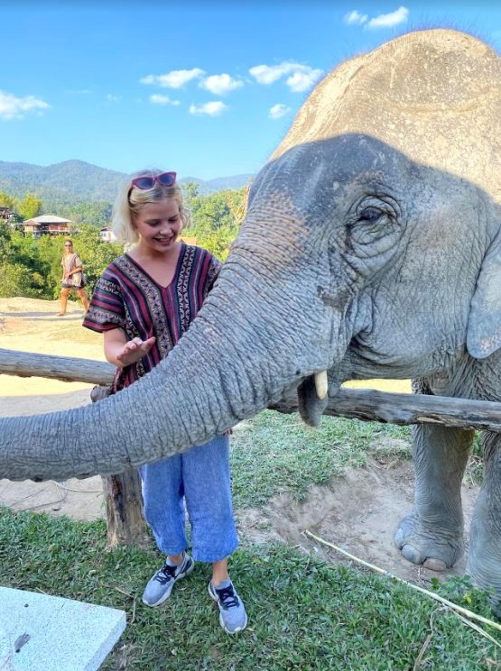 Á fílaverndunarsvæði í Chiang Mai í Taílandi.