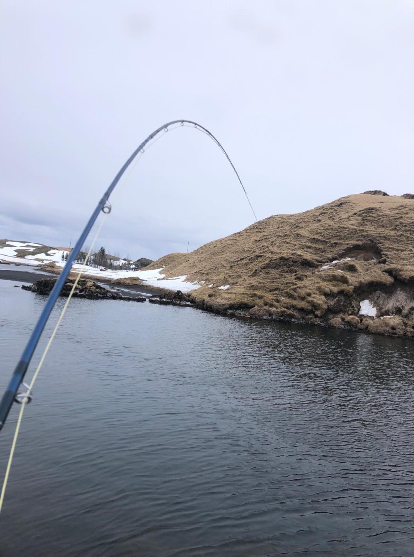 Þetta er algeng sjón í Tungulæk.
