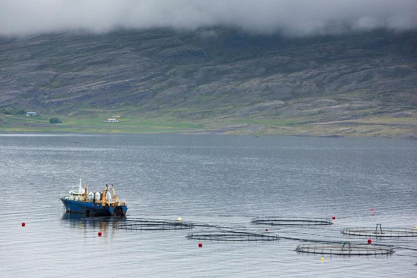 Margir hafa áhuga á átökum um laxeldi á Íslandi, meira ...