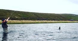 Skemmtilegt augnablik sem hefur verið fryst í Laxá í Laxárdal. Þarna er 65 sentímetra urriði að leggja í sporðadans við Geir Brynjólfsson.
