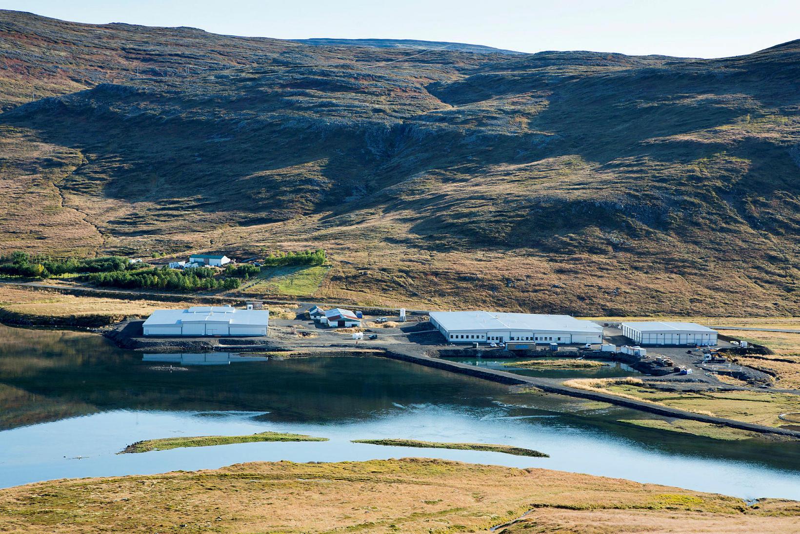 Seiðastöð Arctic Fish í Tálknafirði.