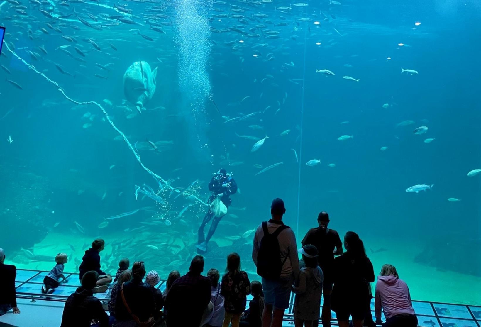 Nordsea Ocearium.