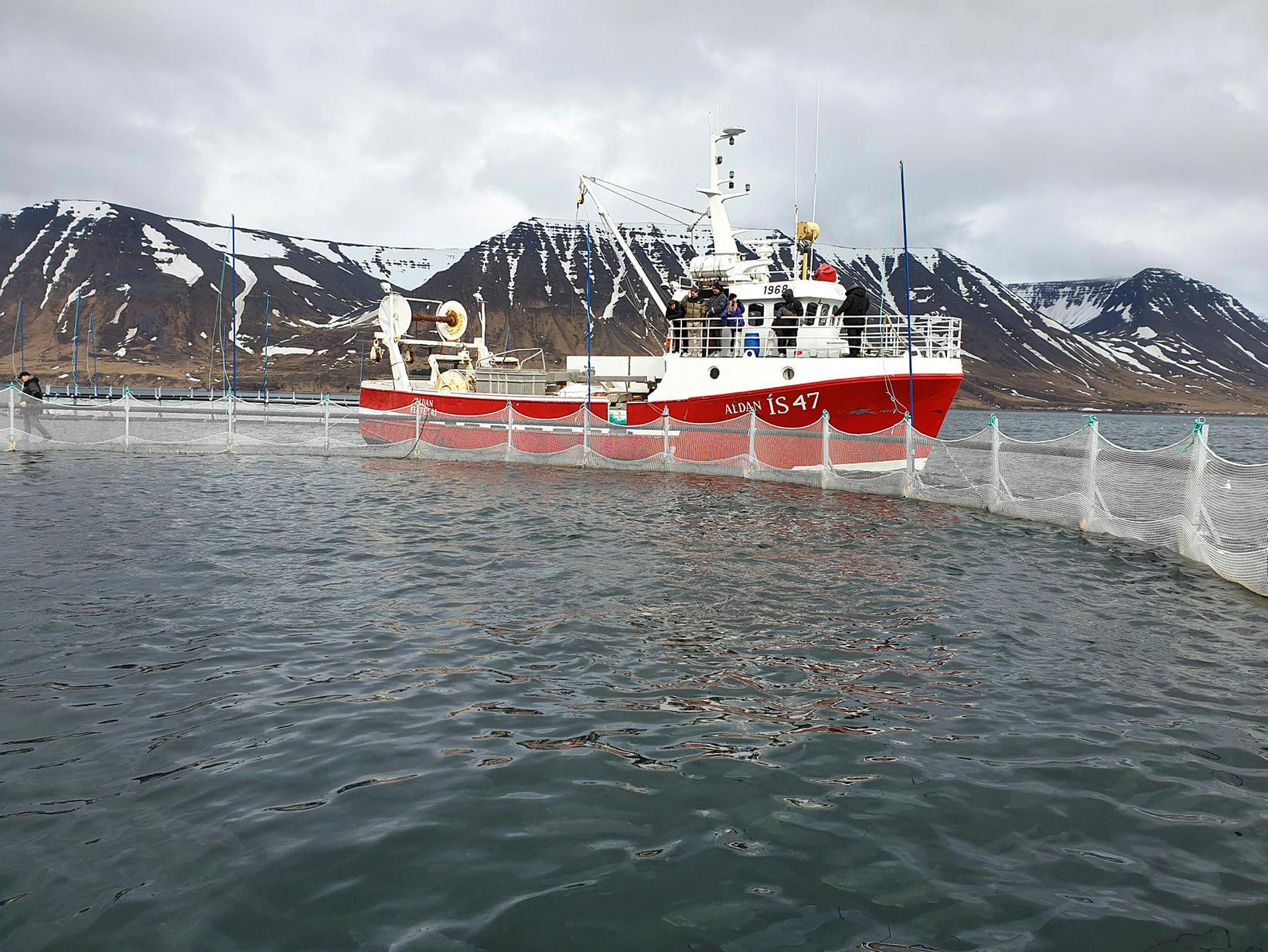 Sjókví fiskeldisfyrirtækisins ÍS 47 á Flateyri.