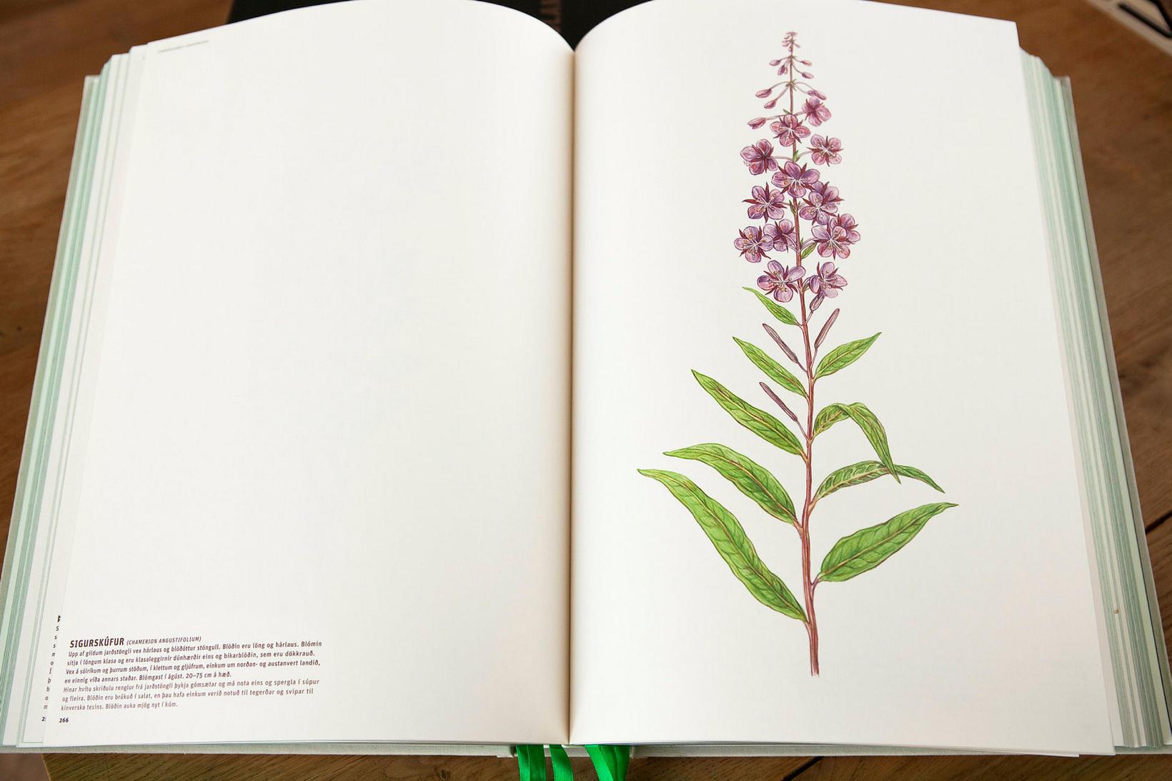 Meðal bóka sem Crymogea gaf út var Flora Islandica.