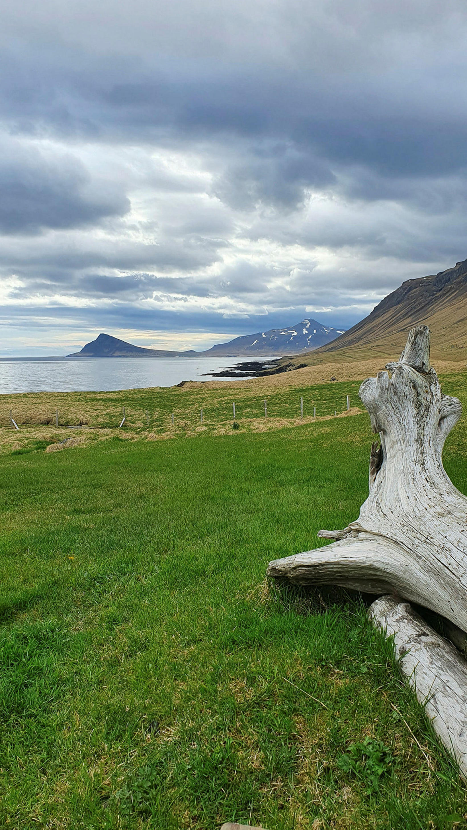 Reykjaneshyrna og rekaviður í Árneshreppi.