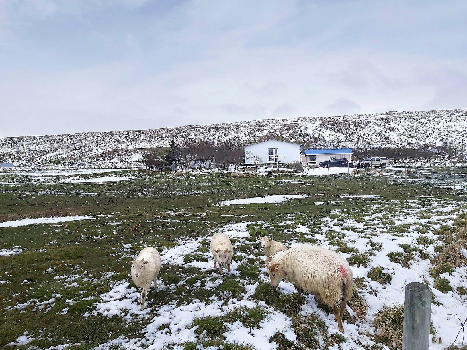 A cold morning at the farm Hákonarstaðir, East Iceland.