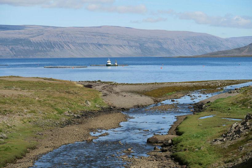Fiskeldiskvíar framan við ármynnið.
