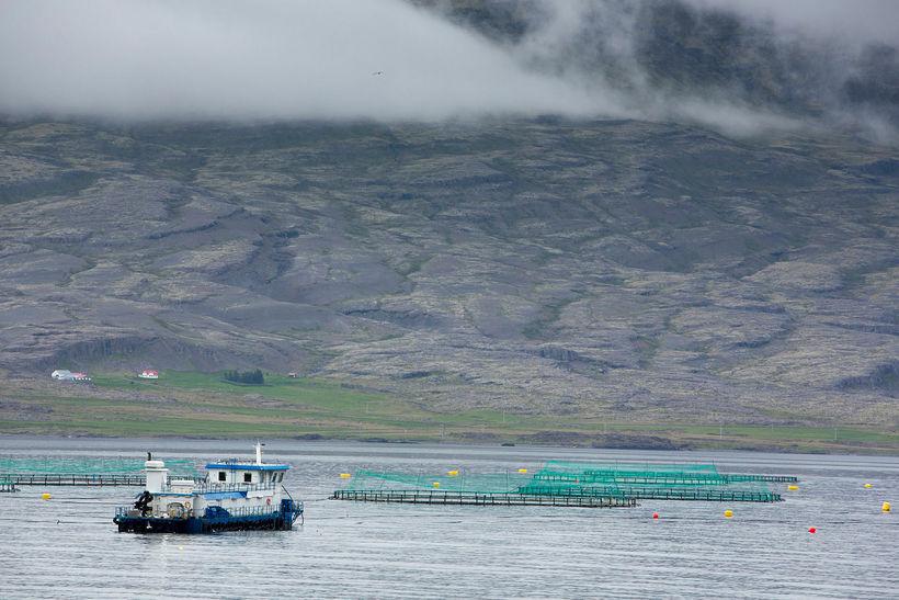 Í kærunni er bæði sjávarútvegs- og landbúnaðarráðherra og Arctic Sea ...