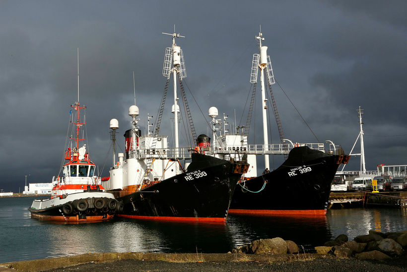 Whaling vessels Hvalur 8 and Hvalur 9 docked at Reykjavik …