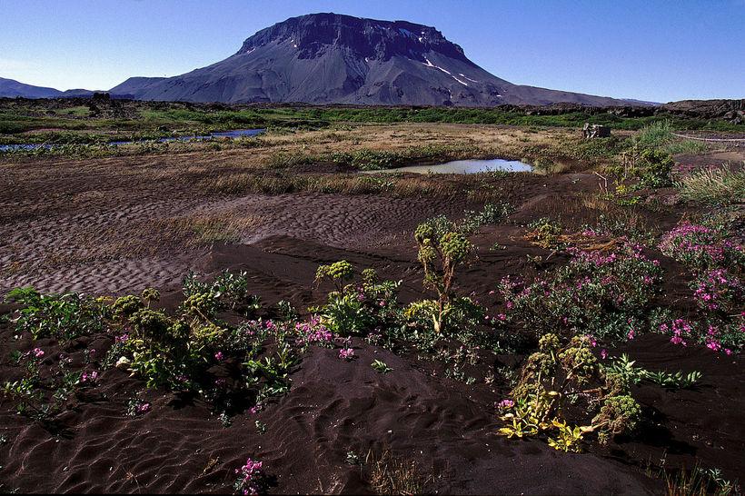 Móbergsstapinn Herðubreið er einstakur á heimsvísu.