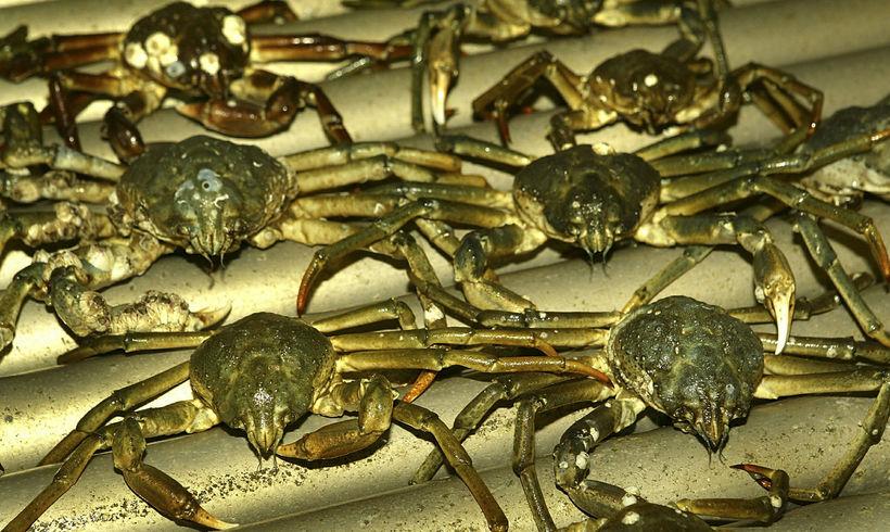 Afrakstur af krabbaveiði.