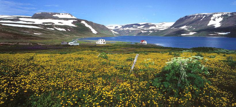 Hesteyri telst hluti af friðlandinu.