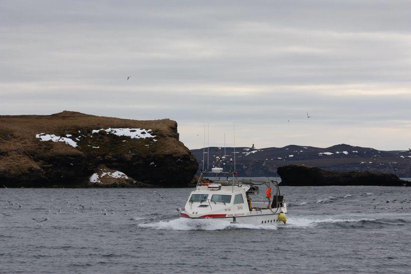 Rúmlega þriðjungur leyfilegs afla er kominn á land.